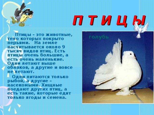 П Т И Ц Ы   Птицы – это животные, тело которых покрыто перьями. На земле насчитывается около 9 тысяч видов птиц. Есть птицы очень большие, а есть очень маленькие. Одни летают выше облаков, а другие и вовсе не летают.  Одни питаются только рыбой, а другие – насекомыми. Хищные поедают других птиц, а есть такие, которые едят только ягоды и семена.  голубь