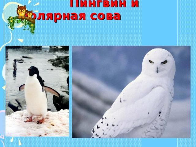 Пингвин и  полярная сова