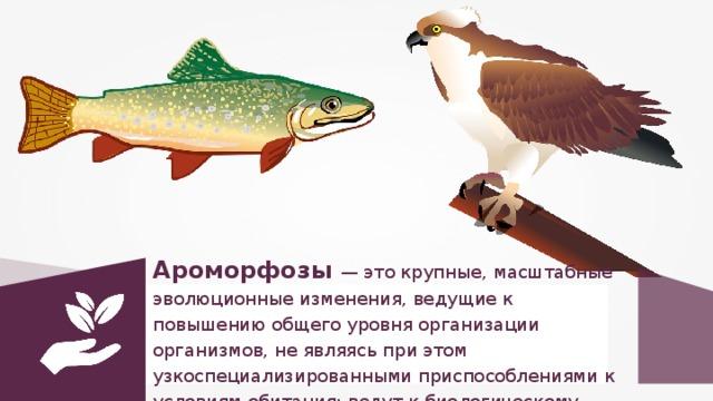 Ароморфозы — это крупные, масштабные эволюционные изменения, ведущие к повышению общего уровня организации организмов, не являясь при этом узкоспециализированными приспособлениями к условиям обитания; ведут к биологическому прогрессу.