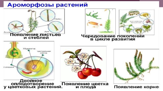 Ароморфозы у растений