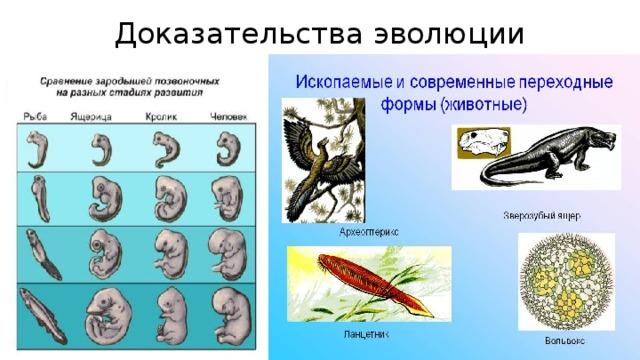 Доказательства эволюции
