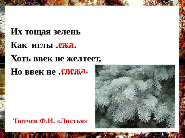 Их тощая зелень Как иглы ……. Хоть ввек не желтеет, Но ввек не ……..  ежа свежа. Дополнительный бал за название произведения и автора Тютчев Ф.И. «Листья»
