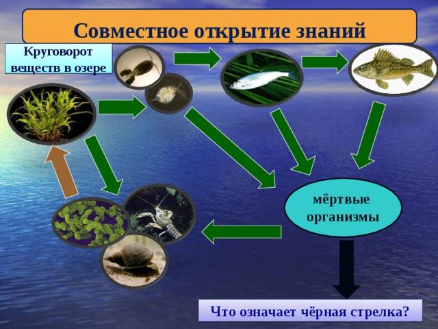 Совместное открытие знаний Круговорот веществ в озере мёртвые организмы Что означает чёрная стрелка?