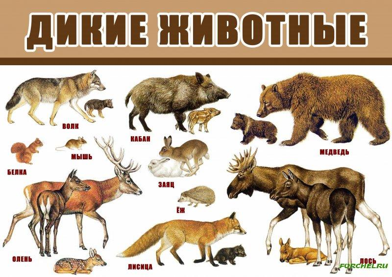 Картинки с надписью дикие животные