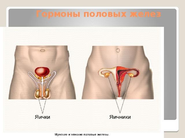 Гормоны половых желез