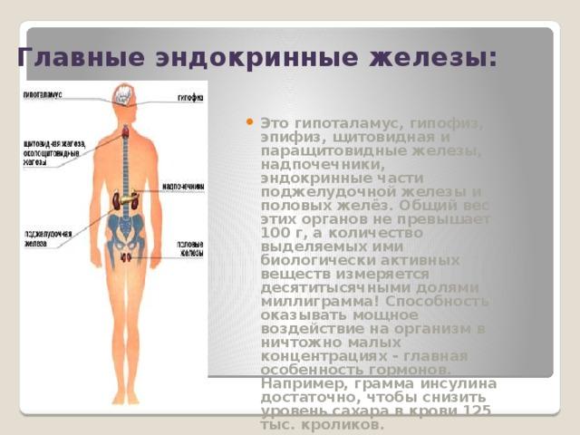 Главные эндокринные железы: