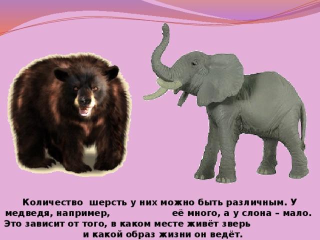 Количество шерсть у них можно быть различным. У медведя, например, её много, а у слона – мало. Это зависит от того, в каком месте живёт зверь и какой образ жизни он ведёт.