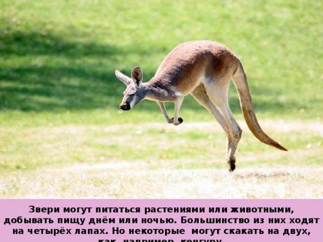 Звери могут питаться растениями или животными, добывать пищу днём или ночью. Большинство из них ходят на четырёх лапах. Но некоторые могут скакать на двух, как, например, кенгуру.