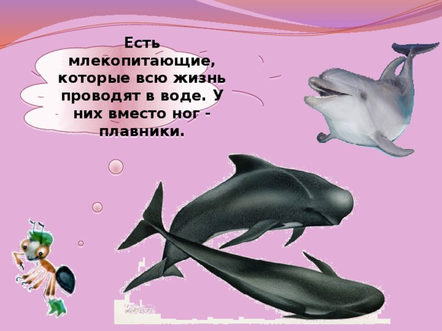 Есть млекопитающие, которые всю жизнь проводят в воде. У них вместо ног - плавники.