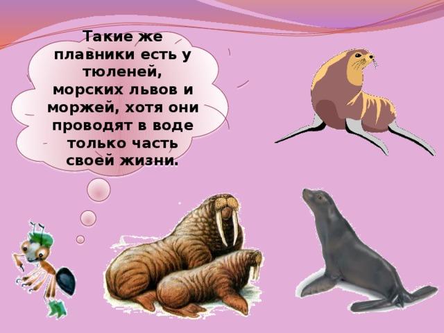 Такие же плавники есть у тюленей, морских львов и моржей, хотя они проводят в воде только часть своей жизни.