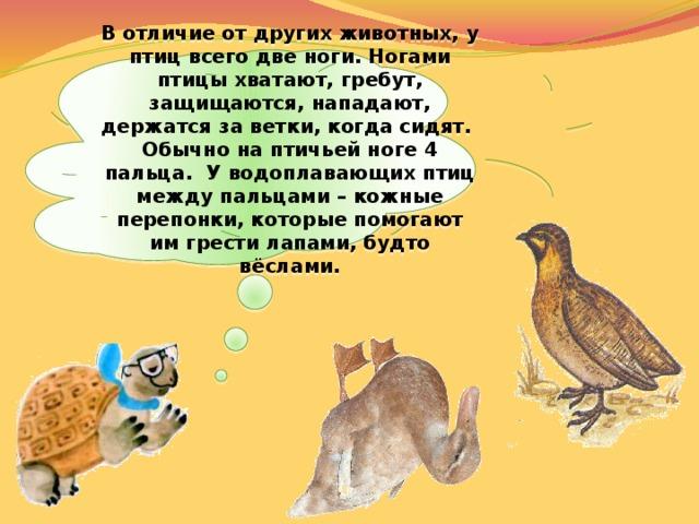 В отличие от других животных, у птиц всего две ноги. Ногами птицы хватают, гребут, защищаются, нападают, держатся за ветки, когда сидят. Обычно на птичьей ноге 4 пальца. У водоплавающих птиц между пальцами – кожные перепонки, которые помогают им грести лапами, будто вёслами.