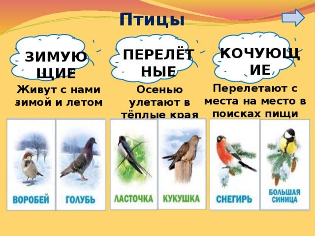 Птицы КОЧУЮЩИЕ ПЕРЕЛЁТНЫЕ ЗИМУЮЩИЕ Перелетают с места на место в поисках пищи Живут с нами зимой и летом Осенью улетают в тёплые края
