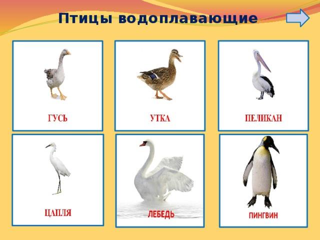 Птицы водоплавающие