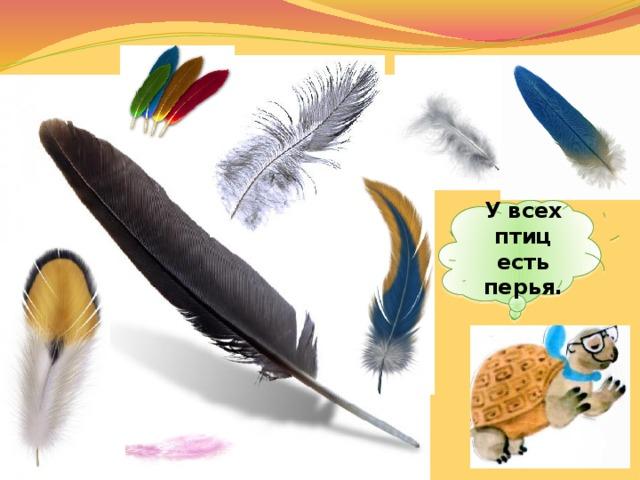 У всех птиц есть перья.