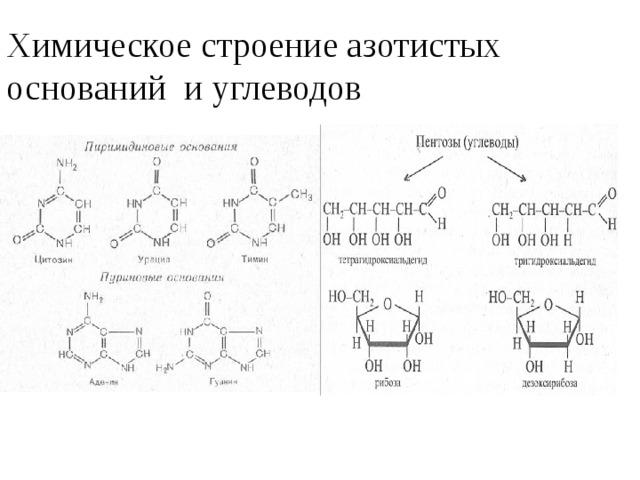 Химическое строение азотистых оснований и углеводов