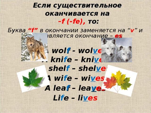 """Если существительное оканчивается на   –f (-fe), то: Буква """"f""""  в окончании заменяется на """" v """" и добавляется окончание –  es  A wol f  - wol v es A kni f e – kni v es A shel f – shel v es A wi f e – wi v es A lea f – lea v es Li f e – li v es"""