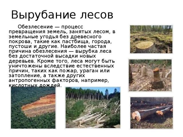 Вырубание лесов   Обезлесение — процесс превращения земель, занятых лесом, в земельные угодья без древесного покрова, такие как пастбища, города, пустоши и другие. Наиболее частая причина обезлесения — вырубка леса без достаточной высадки новых деревьев. Кроме того, леса могут быть уничтожены вследствие естественных причин, таких как пожар, ураган или затопление, а также других антропогенных факторов, например, кислотных дождей.