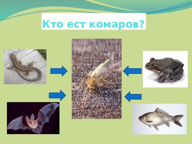 Кто ест комаров?