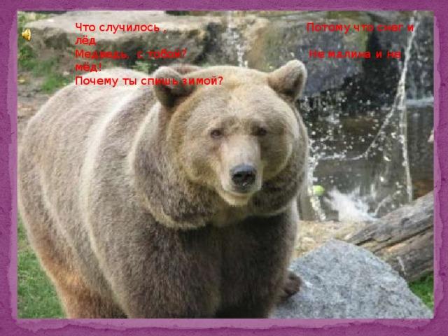 . Что случилось , Потому что снег и лёд Медведь, с тобой? Не малина и не мёд! Почему ты спишь зимой?