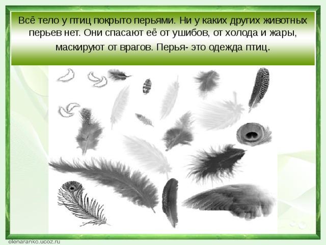 Всё тело у птиц покрыто перьями. Ни у каких других животных перьев нет. Они спасают её от ушибов, от холода и жары, маскируют от врагов. Перья- это одежда птиц .