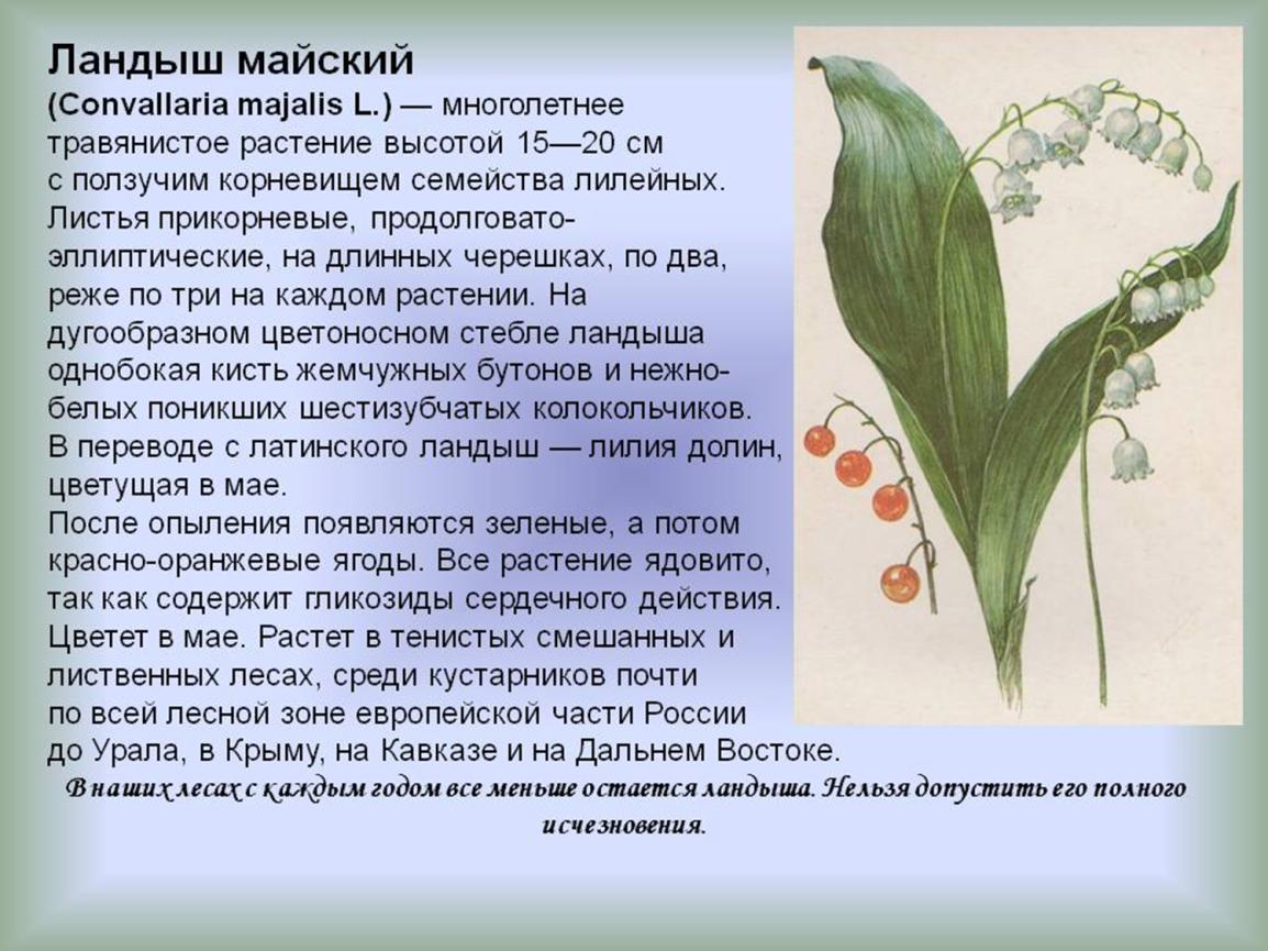взяла что занесено в красную книгу россии информация ландыш бесплатные картинки