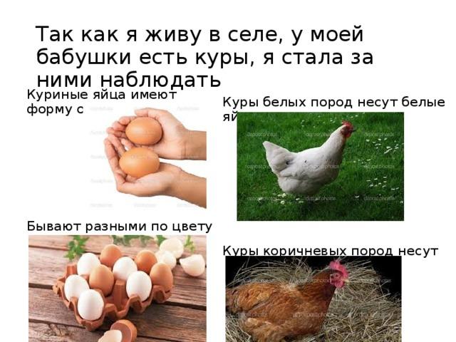 Так как я живу в селе, у моей бабушки есть куры, я стала за ними наблюдать Куриные яйца имеют форму овала Бывают разными по цвету Куры белых пород несут белые яйца Куры коричневых пород несут коричневые яйца