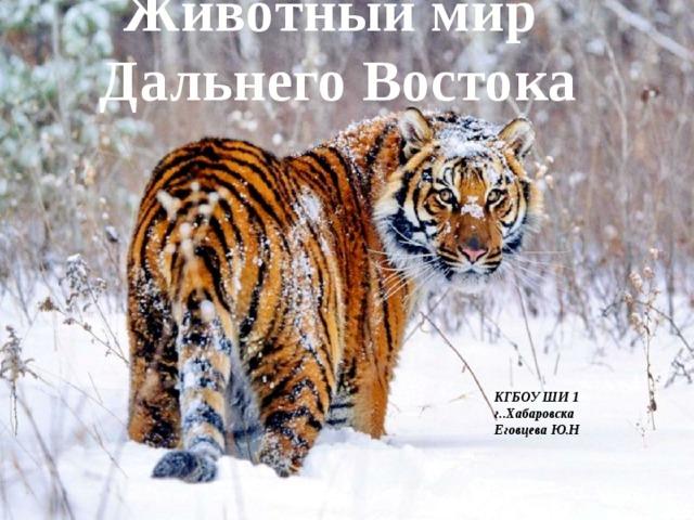 Животный мир  Дальнего Востока   КГБОУ ШИ 1 г..Хабаровска Еговцева Ю.Н