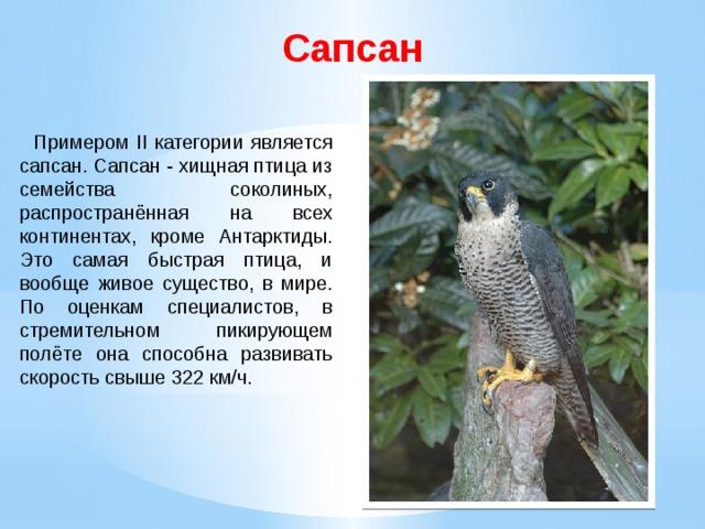 Сапсан  Примером II категории является сапсан. Сапсан - хищная птица из семейства соколиных, распространённая на всех континентах, кроме Антарктиды. Это самая быстрая птица, и вообще живое существо, в мире. По оценкам специалистов, в стремительном пикирующем полёте она способна развивать скорость свыше 322 км/ч.
