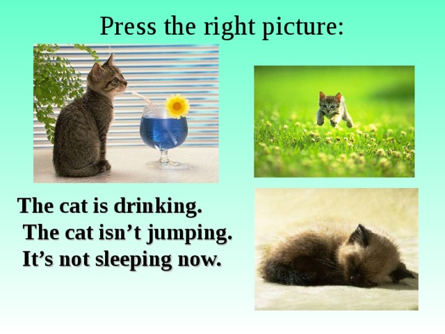Press the right picture: The cat is drinking.  The cat isn't jumping.  It's not sleeping now.
