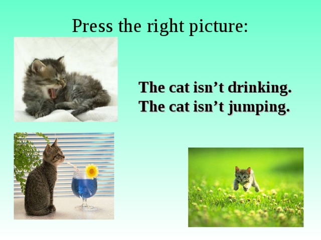 Press the right picture: The cat isn't drinking. The cat isn't jumping.