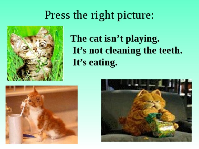 Press the right picture: The cat isn't playing.  It's not cleaning the teeth.  It's eating.
