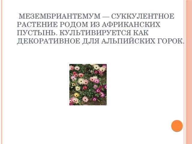 Мезембриантемум — суккулентное растение родом из африканских пустынь. Культивируется как декоративное для альпийских горок.