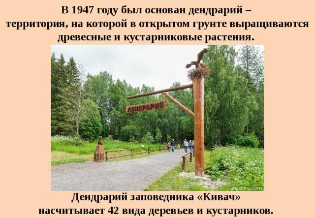 В 1947 году был основан дендрарий –  территория, на которой в открытом грунте выращиваются древесные и кустарниковые растения. Дендрарий заповедника «Кивач» насчитывает 42 вида деревьев и кустарников.