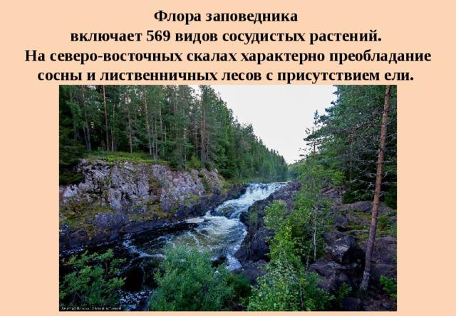 Флора заповедника  включает 569 видов сосудистых растений.  На северо-восточных скалах характерно преобладание сосны и лиственничных лесов с присутствием ели.