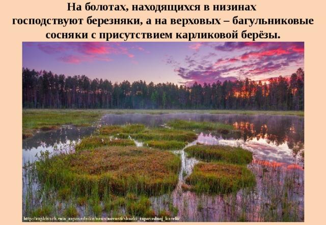 На болотах, находящихся в низинах  господствуют березняки, а на верховых – багульниковые сосняки с присутствием карликовой берёзы.