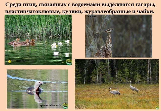 Среди птиц, связанных с водоемами выделяются гагары, пластинчатоклювые, кулики, журавлеобразные и чайки.