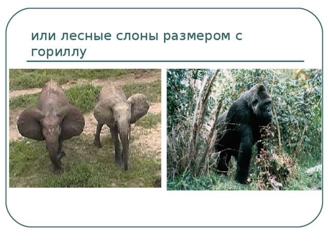 или лесные слоны размером с гориллу