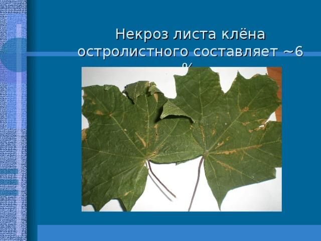 Некроз листа клёна остролистного составляет ~ 6 %.