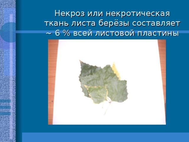 Некроз или некротическая ткань листа берёзы составляет ~ 6 % всей листовой пластины