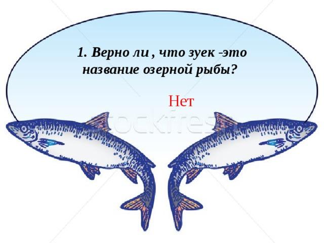 1. Верно ли , что зуек -это название озерной рыбы? Нет