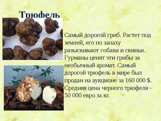 Трюфель  Самый дорогой гриб. Растет под землей, его по запаху разыскивают собаки и свиньи. Гурманы ценят эти грибы за необычный аромат. Самый дорогой трюфель в мире был продан на аукционе за 160 000 $. Средняя цена черного трюфеля – 50 000 евро за кг.
