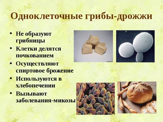 Одноклеточные грибы-дрожжи