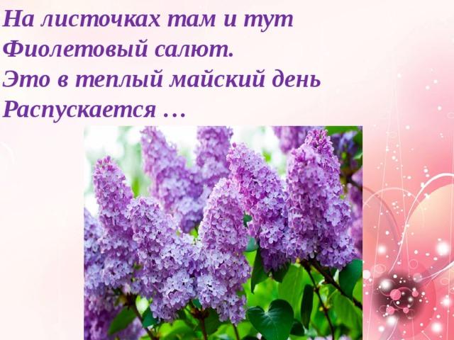 На листочках там и тут  Фиолетовый салют.  Это в теплый майский день  Распускается …