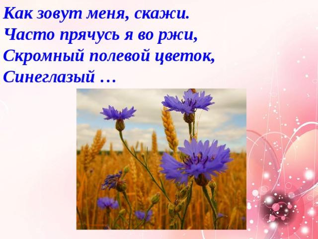 Как зовут меня, скажи.  Часто прячусь я во ржи,  Скромный полевой цветок,  Синеглазый …