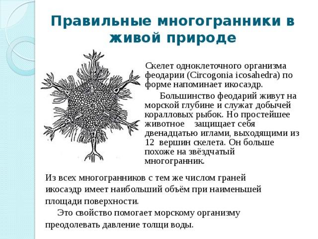 Правильные многогранники в живой природе Скелет одноклеточного организма феодарии (Circogonia icosahedra) по форме напоминает икосаэдр.  Большинство феодарий живут на морской глубине и служат добычей коралловых рыбок. Но простейшее животное защищает себя двенадцатью иглами, выходящими из 12 вершин скелета. Он больше похоже на звёздчатый многогранник. Из всех многогранников с тем же числом граней икосаэдр имеет наибольший объём при наименьшей площади поверхности.  Это свойство помогает морскому организму преодолевать давление толщи воды.