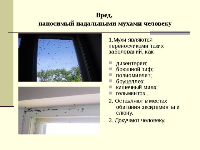 Вред,  наносимый падальными мухами человеку 1.Мухи являются переносчиками таких заболеваний, как:  дизентерия; брюшной тиф; полиомиелит; бруцеллез; кишечный миаз; гельминтоз . 2. Оставляют в местах обитания экскременты и слюну. 3. Докучают человеку.