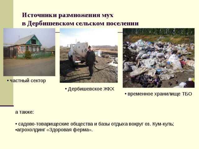 Источники размножения мух  в Дербишевском сельском поселении  частный сектор  ДербишевскоеЖКХ  временное хранилище ТБО а также: