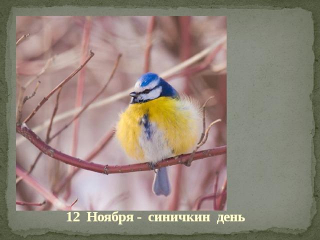 12 Ноября - синичкин день