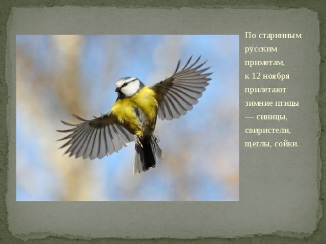 Постаринным русским приметам, к12ноября прилетают зимние птицы ― синицы, свиристели, щеглы, сойки. Летом они живут влесу, аспервыми холодами перебираются ближе кжилью человека.