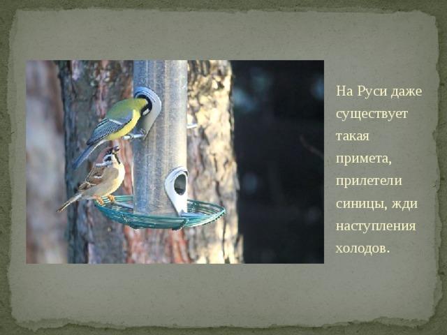 На Руси даже существует такая примета, прилетели синицы, жди наступления холодов. Поэтому дети зимой синичек нужно обязательно подкармливать. Чем кормить синичек?